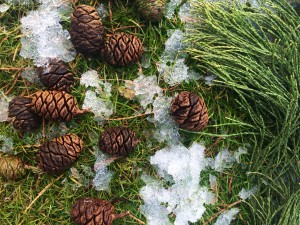 Magie de la Nature en hiver